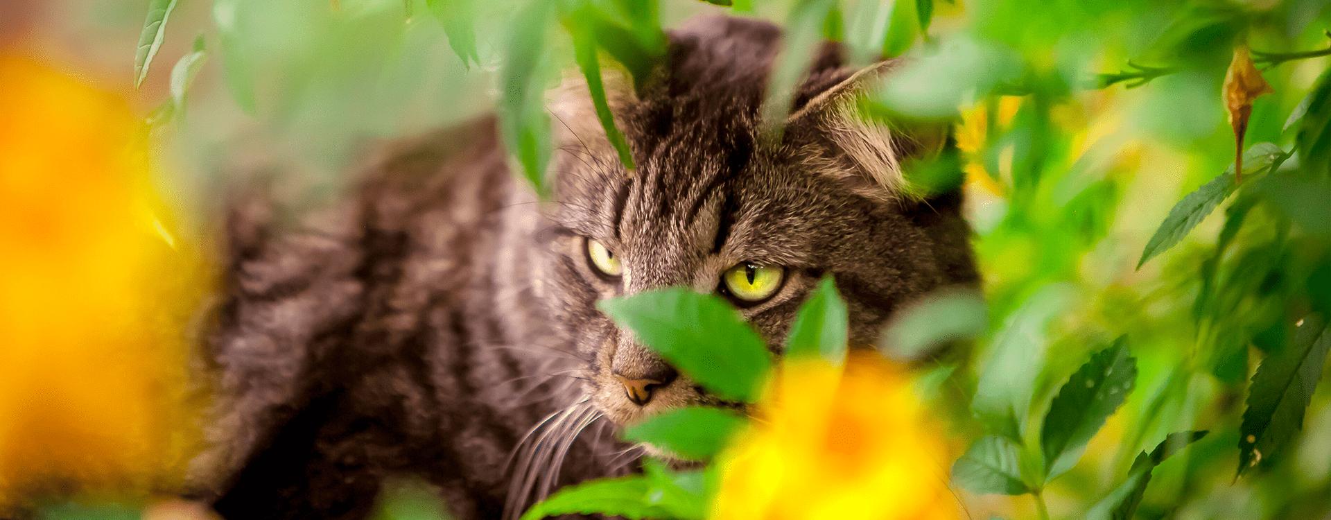 Γάτα που κρύβεται